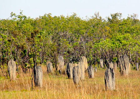 using termite mound in Australia as a navigation guide
